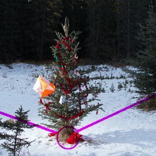 Jul i orienteringsskoven
